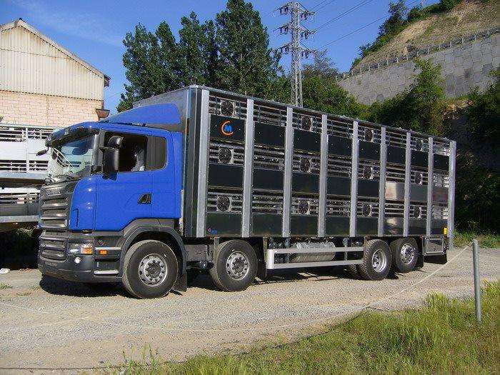Ganaderos-Varkens-Camions--17