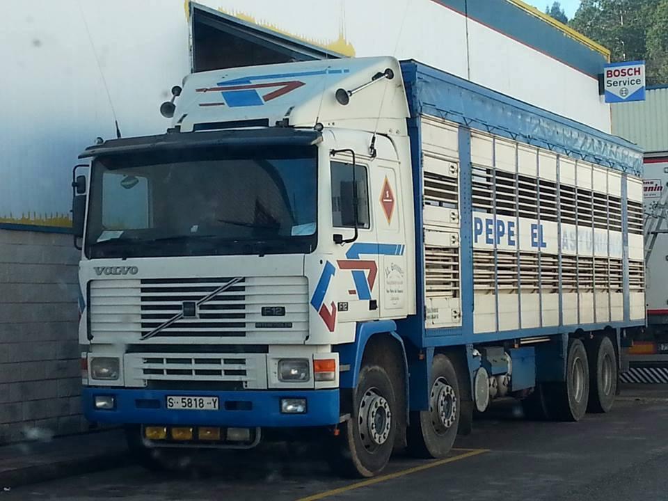 Ganaderos-Varkens-Camions--18