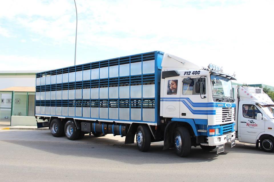 Ganaderos-Varkens-Camions--19