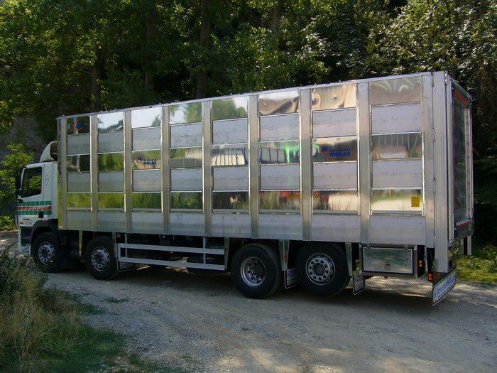 Ganaderos-Varkens-Camions--2