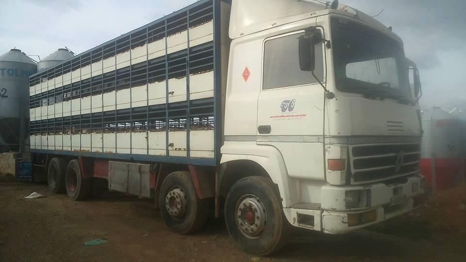 Ganaderos-Varkens-Camions--21