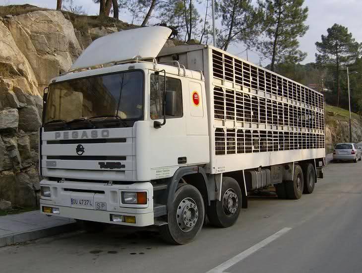 Ganaderos-Varkens-Camions--24