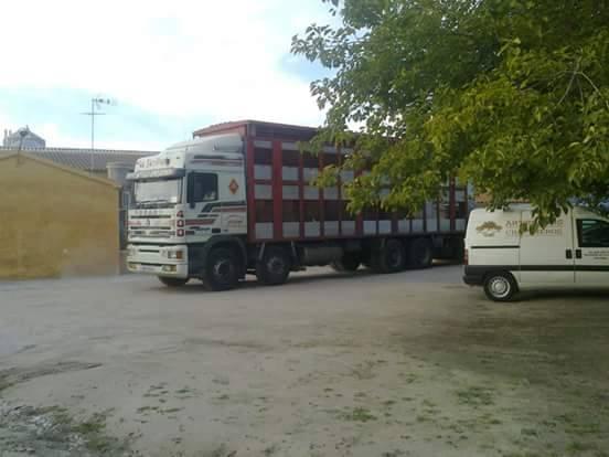 Ganaderos-Varkens-Camions--25