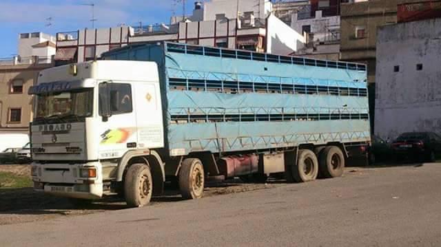 Ganaderos-Varkens-Camions--27