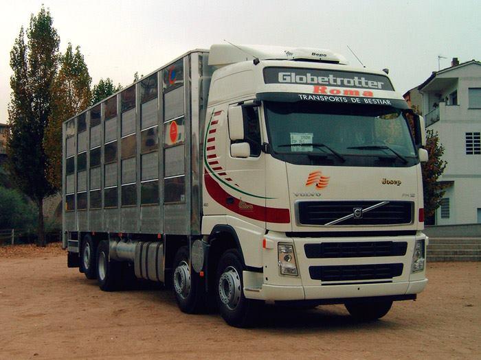Ganaderos-Varkens-Camions--28