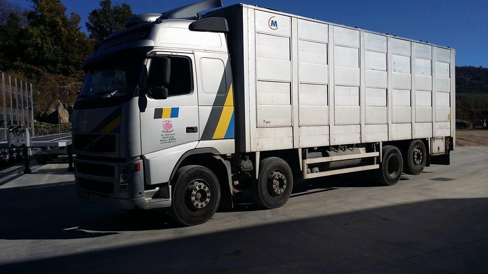 Ganaderos-Varkens-Camions--29