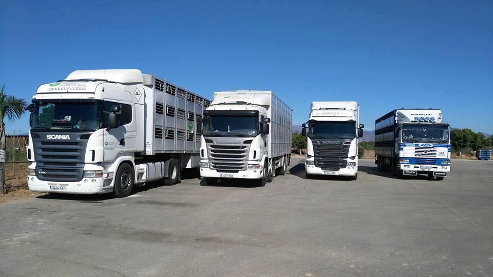 Ganaderos-Varkens-Camions--3