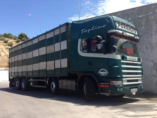 Ganaderos-Varkens-Camions--31