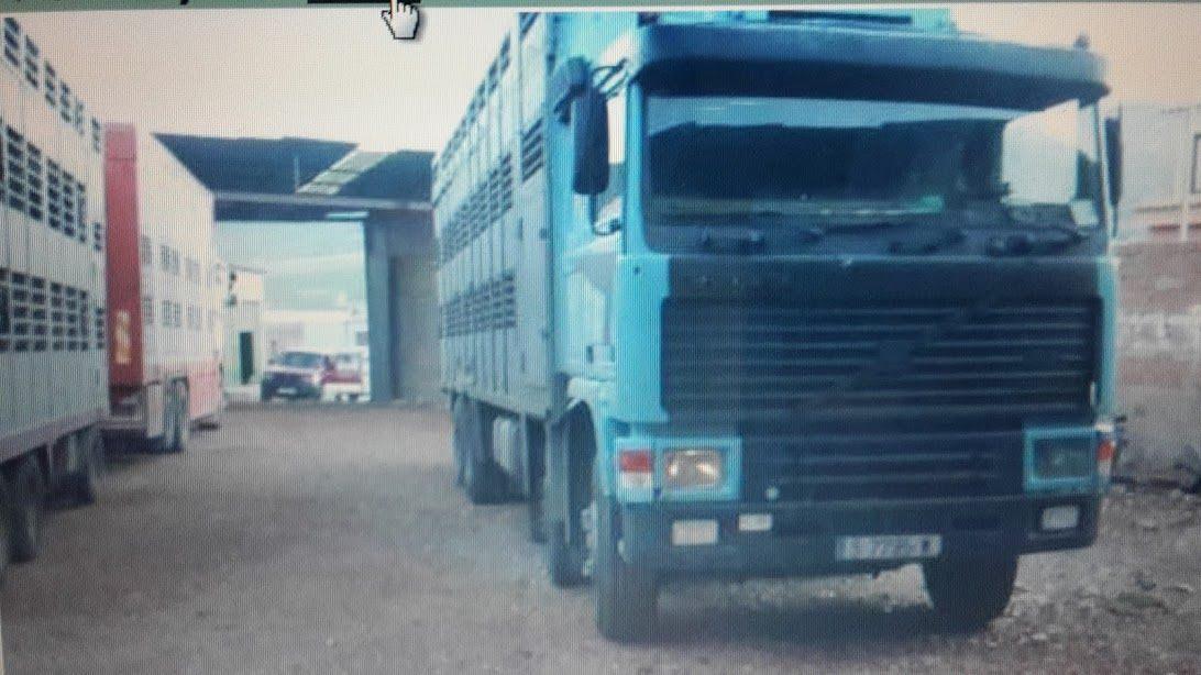 Ganaderos-Varkens-Camions--32
