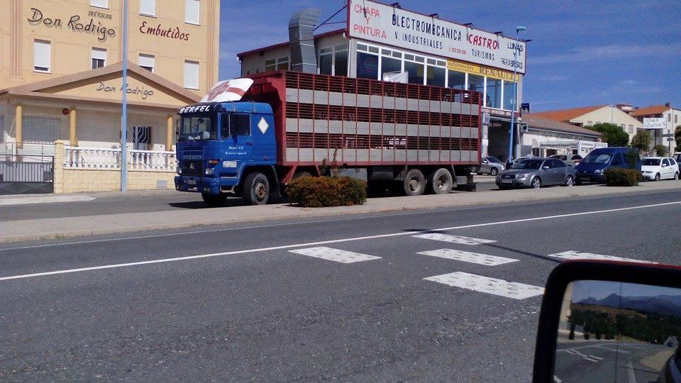 Ganaderos-Varkens-Camions--6