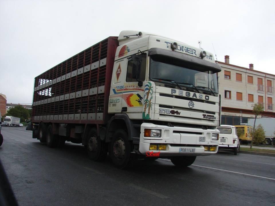 Ganaderos-Varkens-Camions--8
