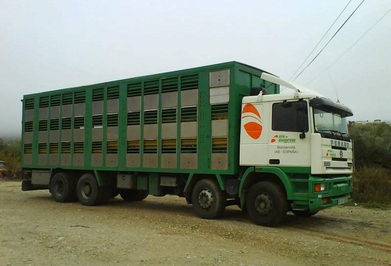 Ganaderos-Varkens-Camions--35