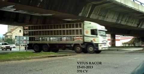 Ganaderos-Varkens-Camions--37