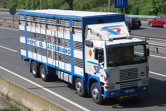 Ganaderos-Varkens-Camions--40