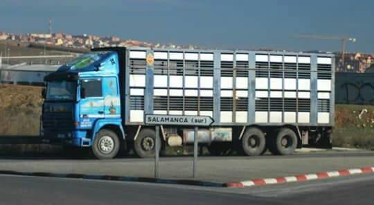 Ganaderos-Varkens-Camions--42