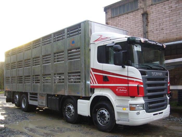 Ganaderos-Varkens-Camions--43