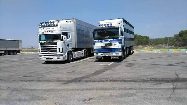 Ganaderos-Varkens-Camions--44