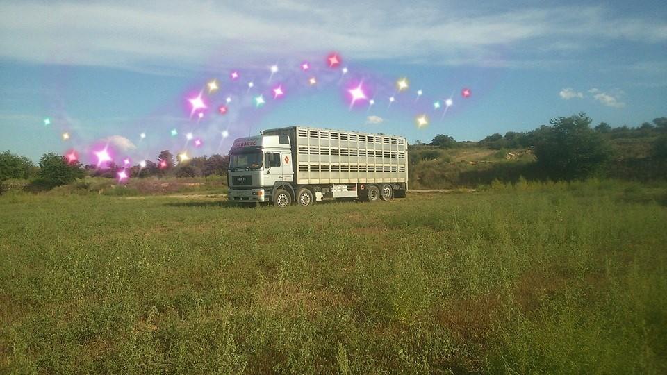Ganaderos-Varkens-Camions--47