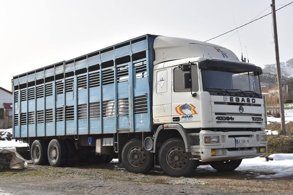Ganaderos-Varkens-Camions--50