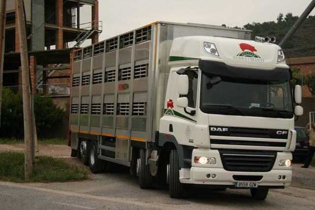 Ganaderos-Varkens-Camions--56
