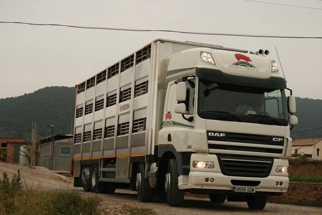 Ganaderos-Varkens-Camions--58