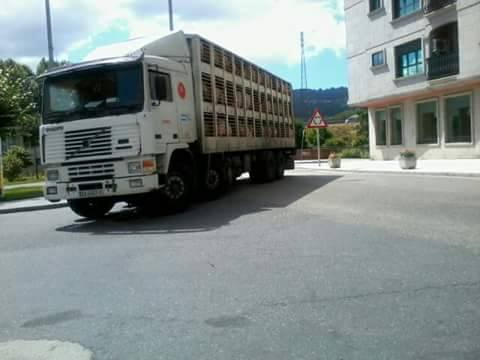 Ganaderos-Varkens-Camions--61
