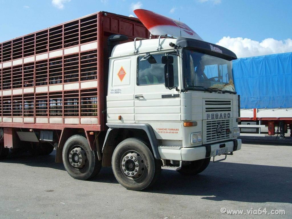 Ganaderos-Varkens-Camions--68
