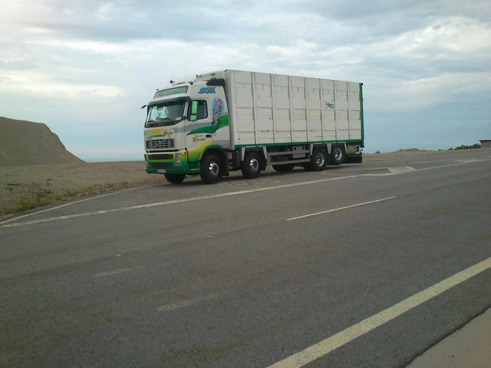 Ganaderos-Varkens-Camions--70