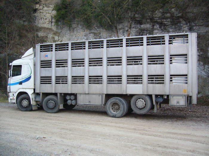 Ganaderos-Varkens-Camions--73