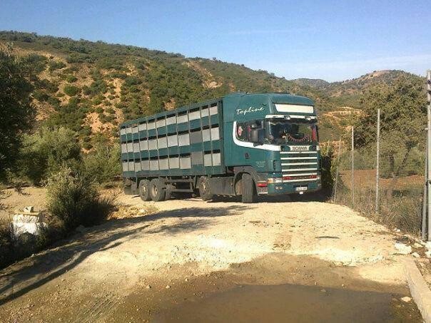 Ganaderos-Varkens-Camions--74