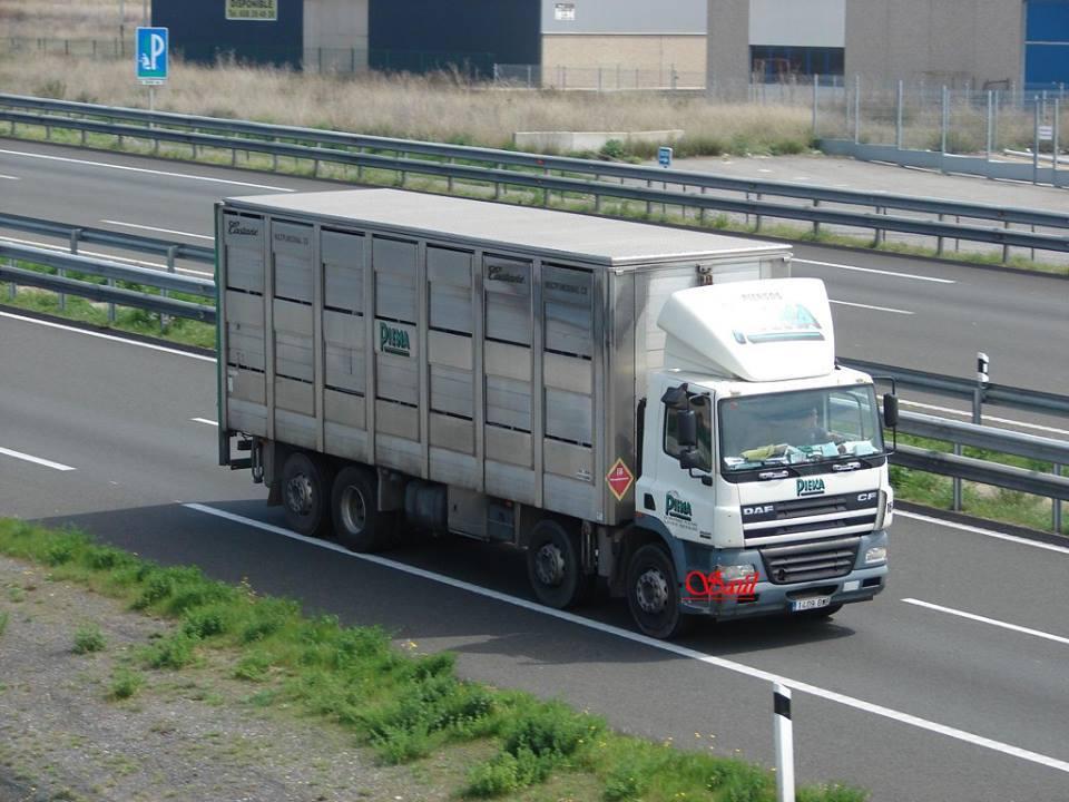 Ganaderos-Varkens-Camions--75
