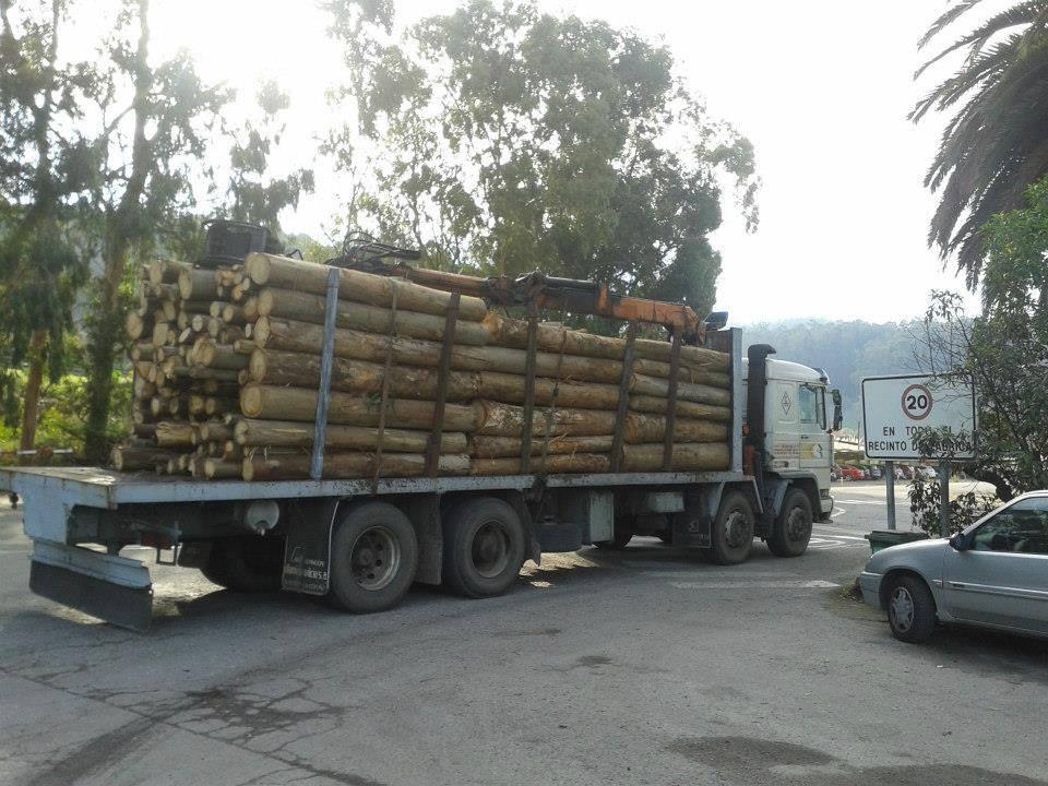 Madereros---Hout--trucks--14