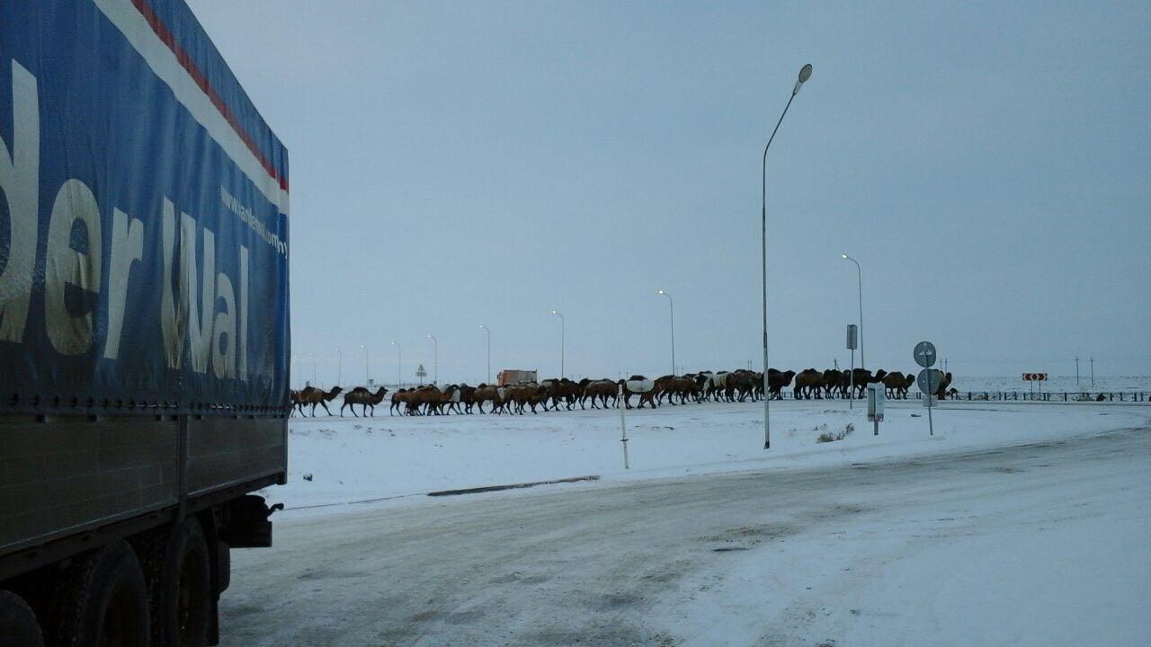 Beyneu-Kazachstan--met-een-karavaan-in-je-kielzog-Foto-van-chauffeur-Alexander-Suprun