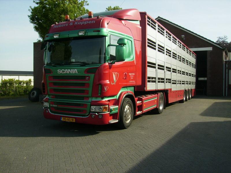 Scania--BS-NS-81