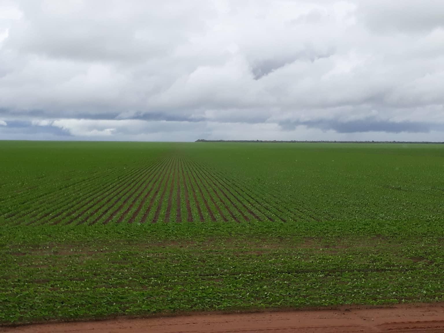 campos-de-soja--Soja-velden--1