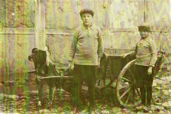 met-de-honden-kar