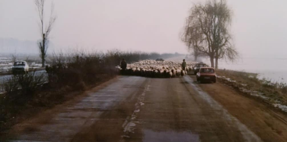 Henk-Klasens-Overstekend-wild-in-Romania-begin-jaren-90-1