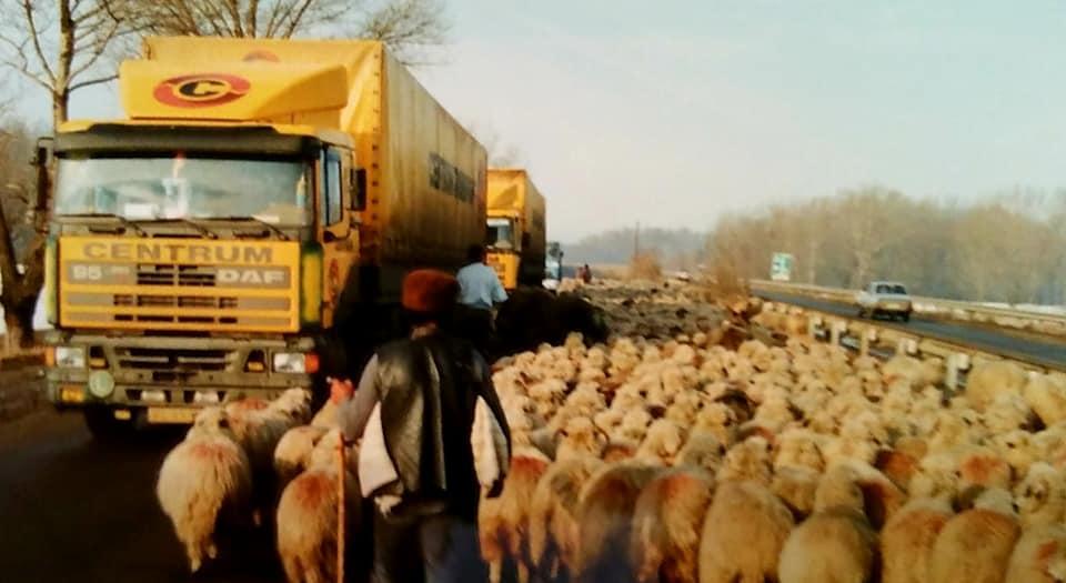 Henk-Klasens-Overstekend-wild-in-Romania-begin-jaren-90-2