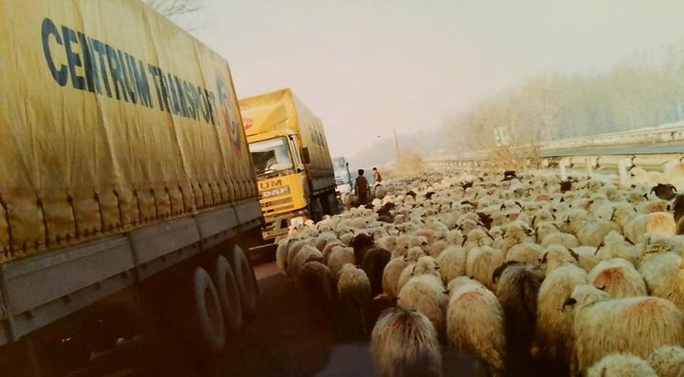 Henk-Klasens-Overstekend-wild-in-Romania-begin-jaren-90-3