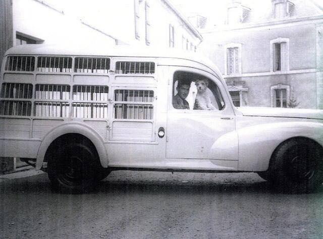 Peugeot-203-dierenvervoer