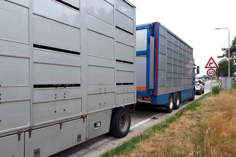 vrachtwagen-op-de-weg-met-veetransport