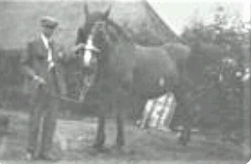 0-1--1930-14-jaar-oud-begonnen-met-paard-en-wagen--Hij-vervoerde-kolen-vanaf-het-station-in-Rijen-naar-Dongen-voor-1-75-per-vracht