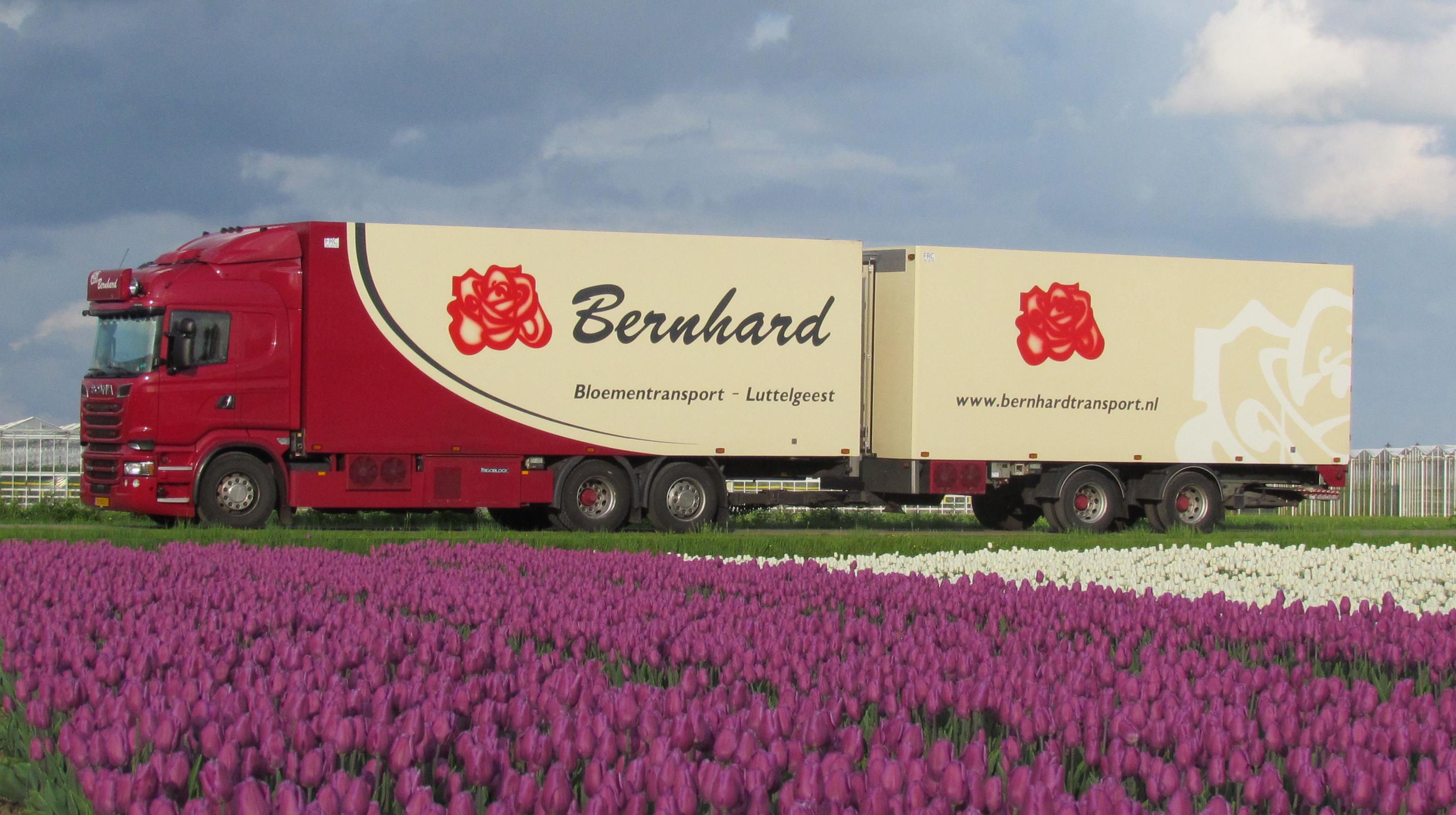 Bernhard-5