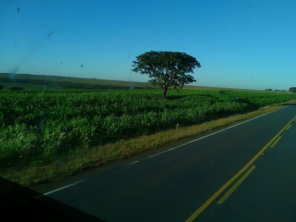 9-6-2019-door-Sao-Paulo-op-weg-naar-de-laadplaats-Paulina--24