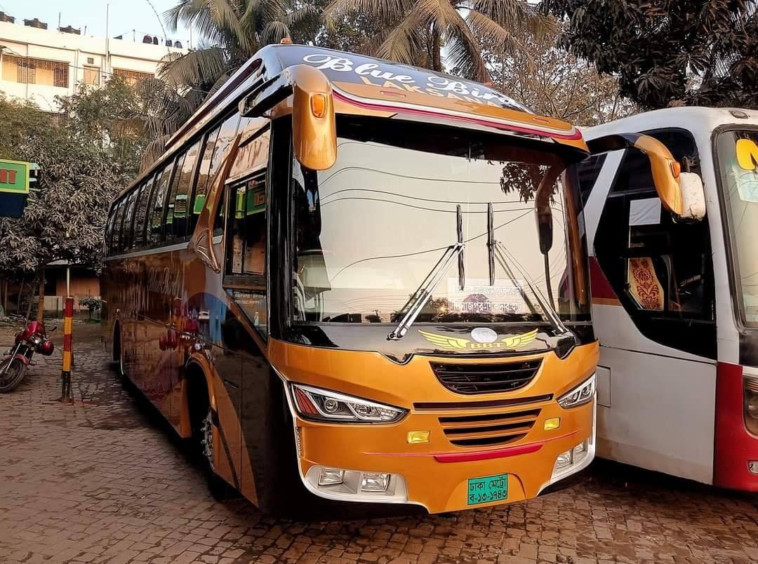 Bengali-Coach-(4)
