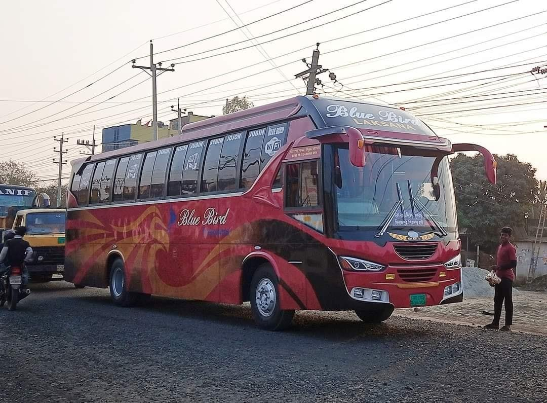 Bengali-Coach-(8)