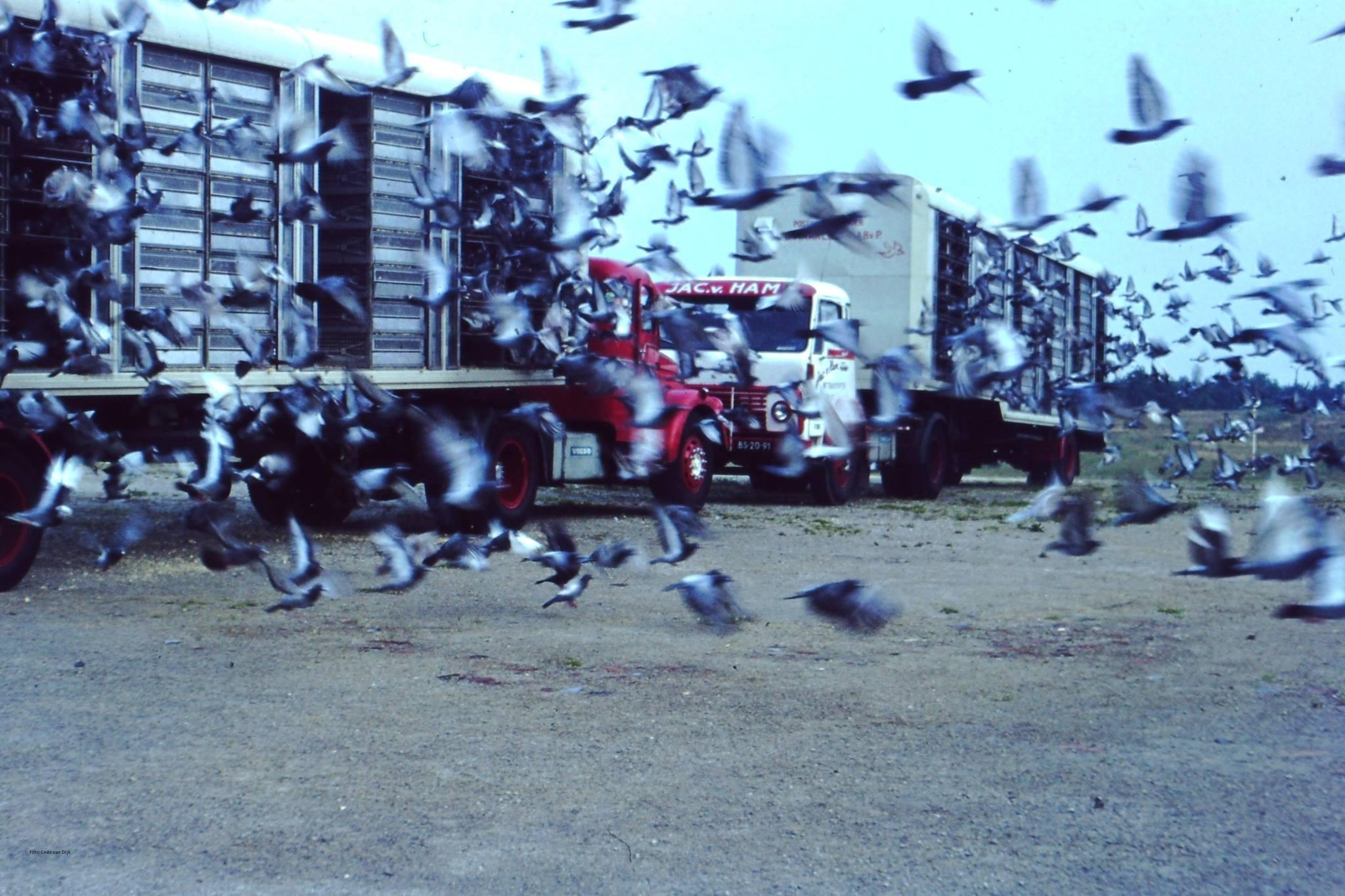 Volvo-s--duiven-lossen