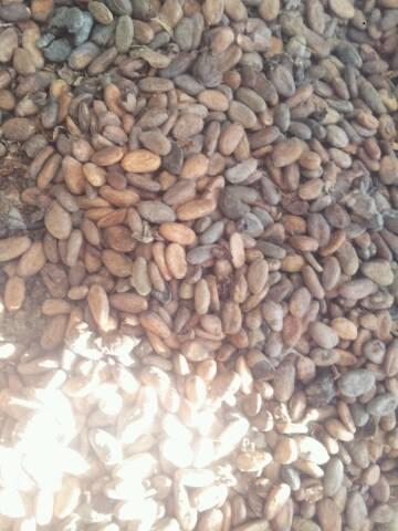 9-7-2013-20-ton-Cacaobonen-Luithagen-Antwerpen-(7)