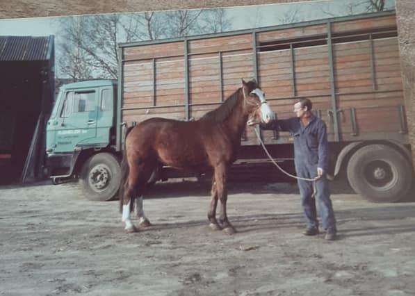 Daf-veewagen-Chauffeur-Bruijnen-archief-zoon-Hugo-(6)