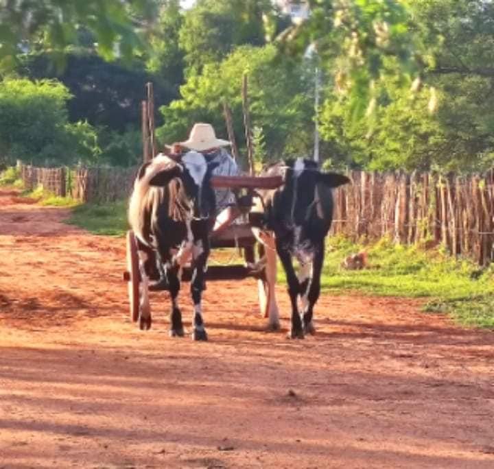 Ibitiara-Bahia-omgeving--(14)